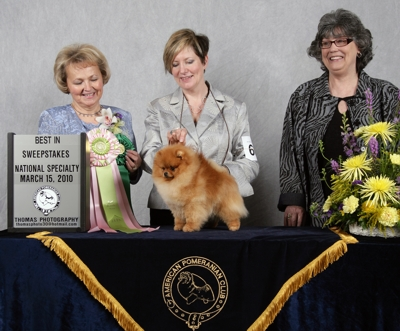 pomeranian club of america chriscendo pomeranians 4589